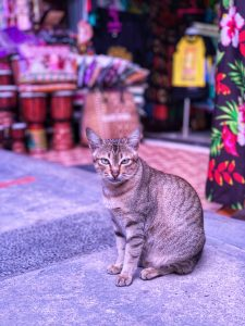 Pelabuhan Tomok Market Kitty Indonesia