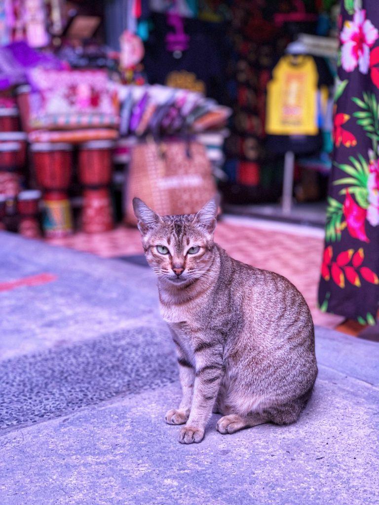 Pelabuhan Tomok Market cat Indonesia